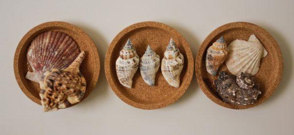 3 ιδέες για κατασκευές με κοχύλια και άμμο