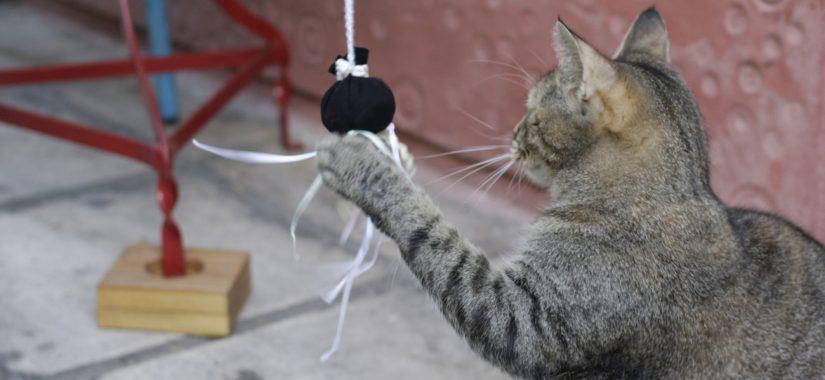 Χειροποίητα δώρα για ζωόφιλους και τα κατοικίδια τους