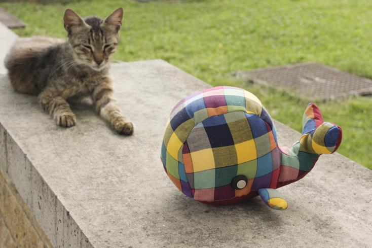 Που τη χάνεις, που τη βρίσκεις, να χουζουρεύει με γάτες
